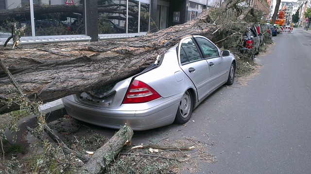 Be prepared for unanticipated events like a tree falling on your car