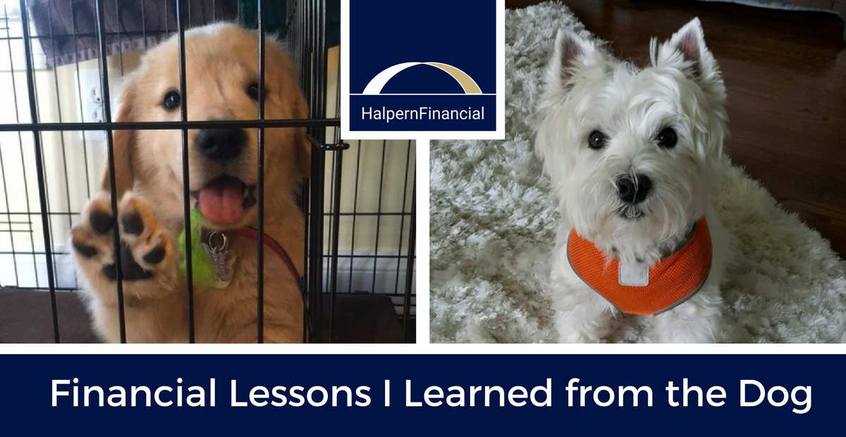 Financial Lessons I Learned from the Dog Thumbnail