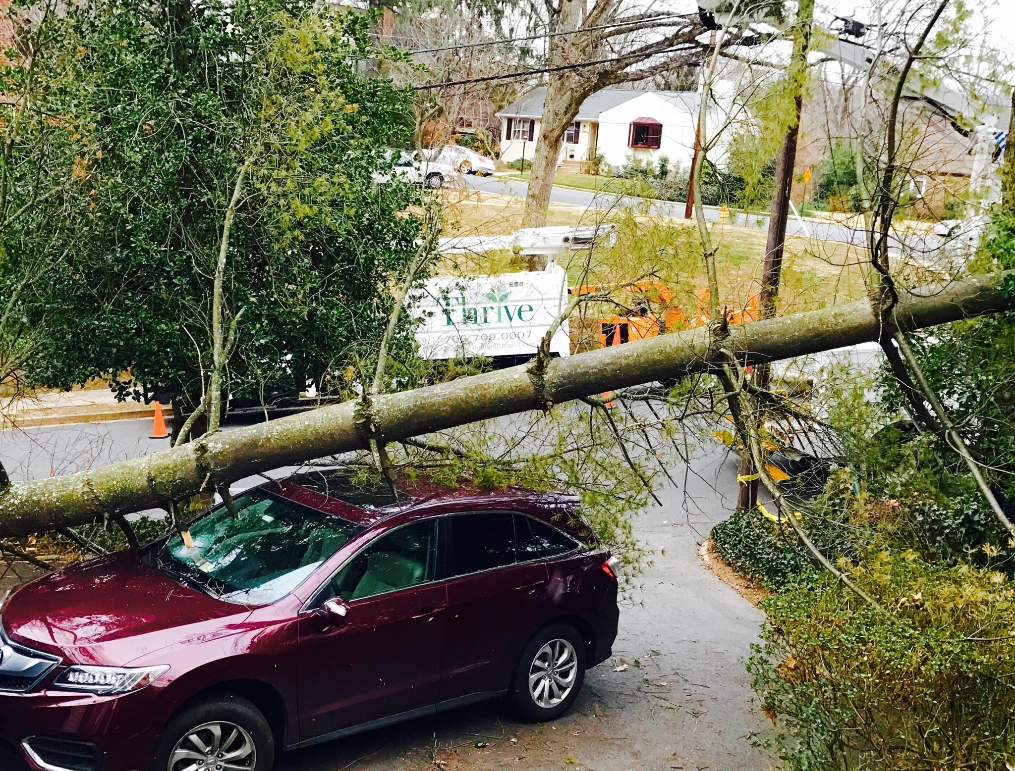 What Happens if My Neighbor\u0027s Tree Falls on My Property? \u2014 White ...