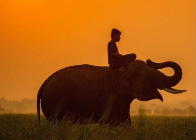 Riding The Elephant: Mastering Decision-Making In Money And Life Thumbnail