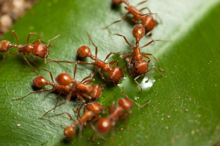 What Fire Ants Can Teach Us About Our Investments Thumbnail