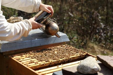 What Beekeepers Can Teach Us About Investing Thumbnail
