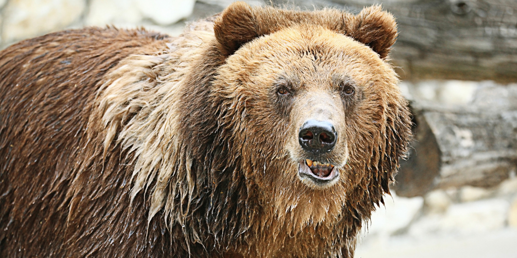 What You Need To Know About Recessions And Bear Markets Thumbnail