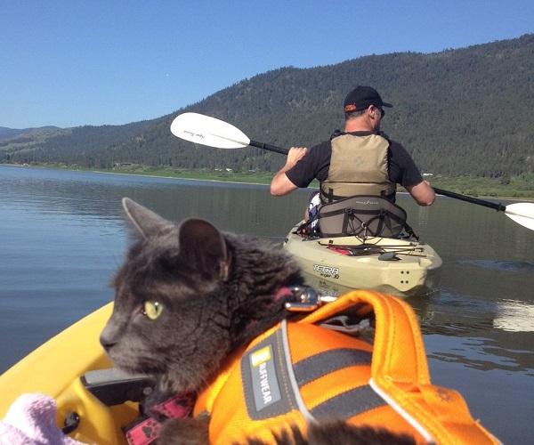 Even the Fidler family cat enjoys kayaking on the local lakes.