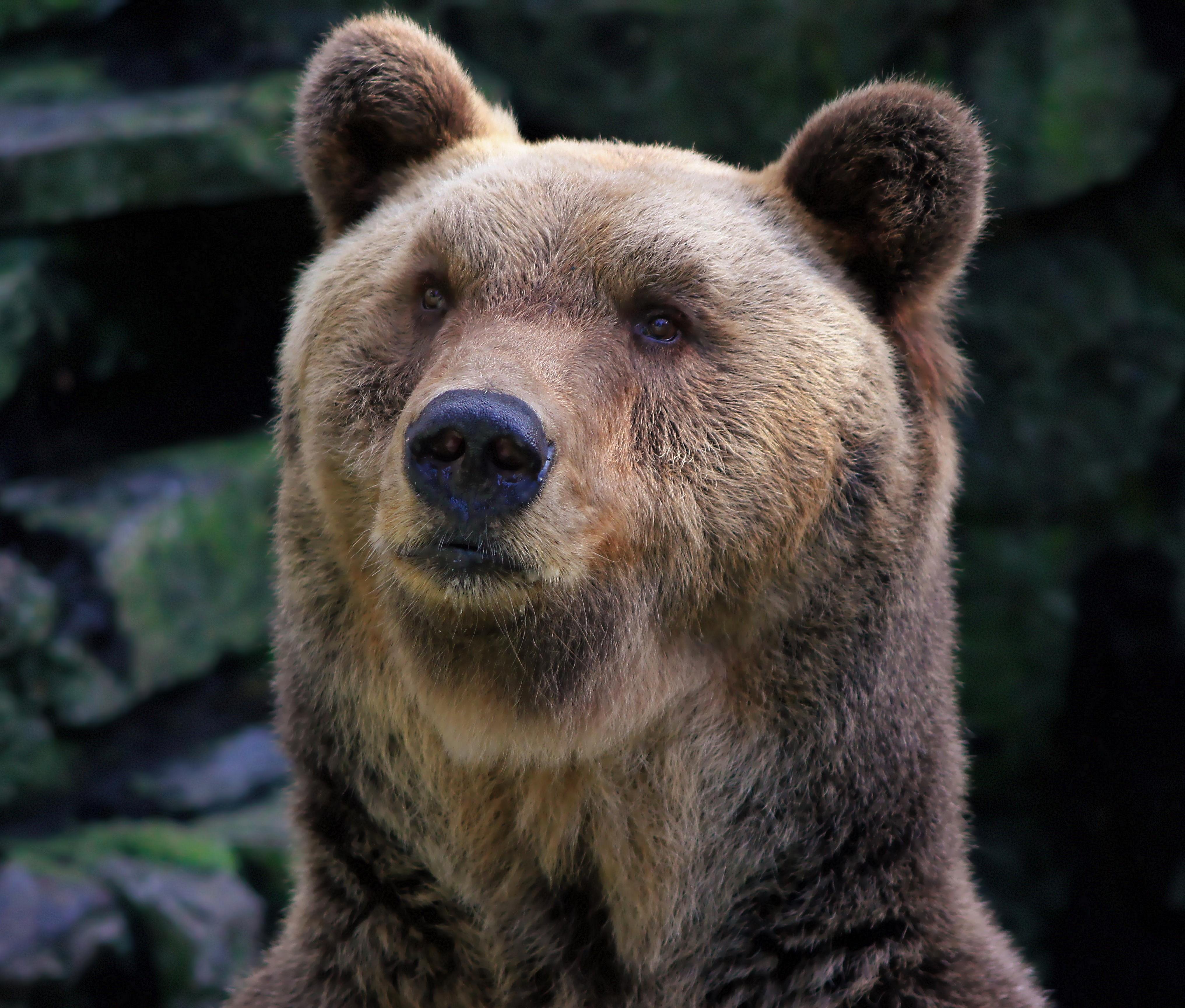 Understanding the Bear: Bull and bear market trends Thumbnail