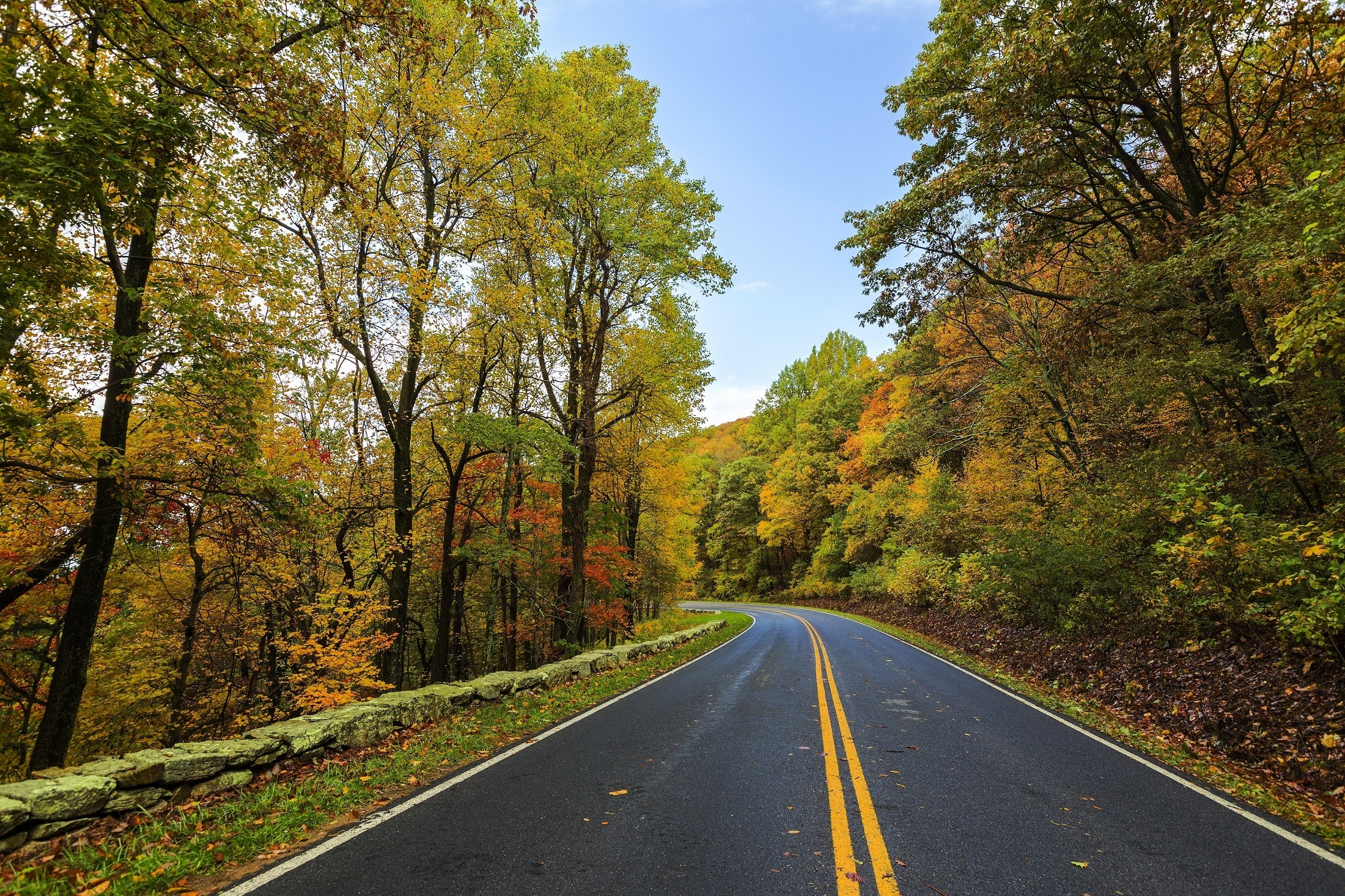 photo of a winding road surrounded by trees in the fall