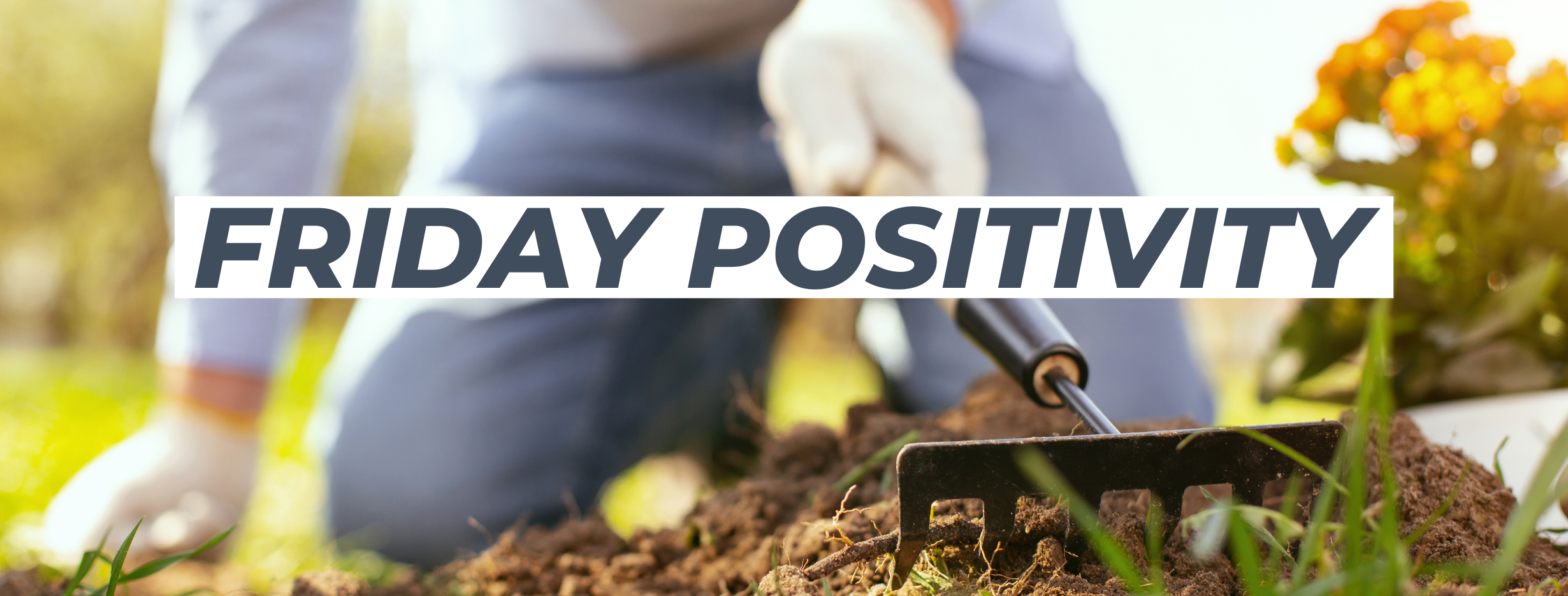 Friday Positivity - Planting Seeds In Your Backyard Could Reduce Stress Levels Equivalent To 8 Mindfulness Sesssions Thumbnail