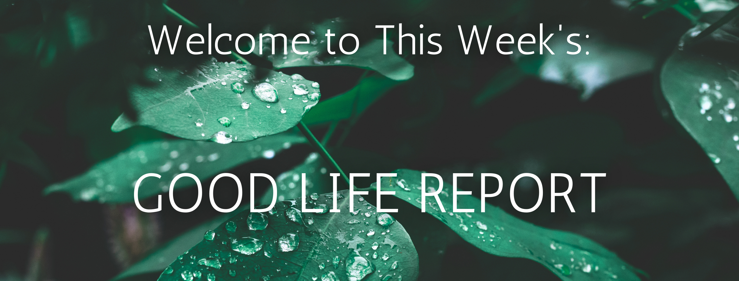 The Good Life Report - Natural Ingredients to Look for in Your Products Thumbnail