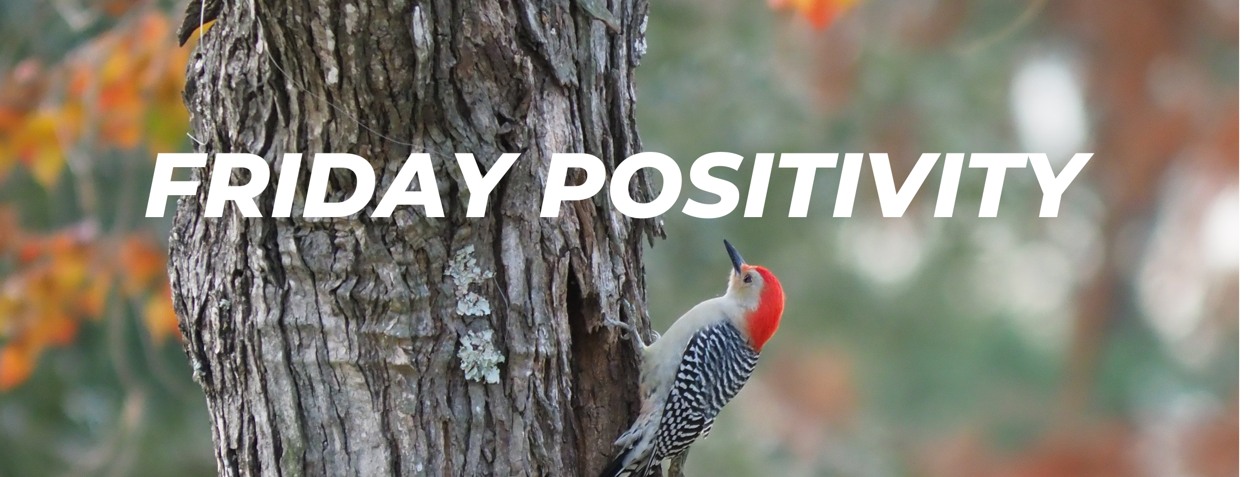 Friday Positivity - Endangered Woodpeckers Make Comeback Amidst Devastating Wildfires Thumbnail