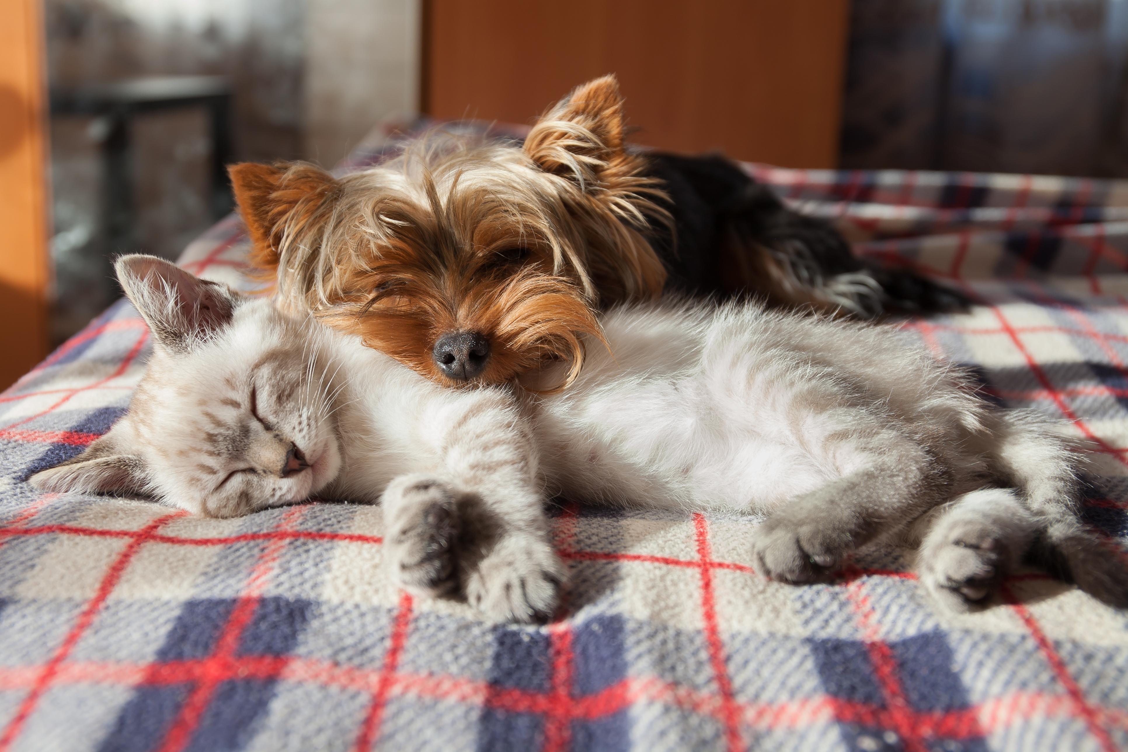 Êtes-vous bien préparé pour l'adoption d'un animal? Thumbnail