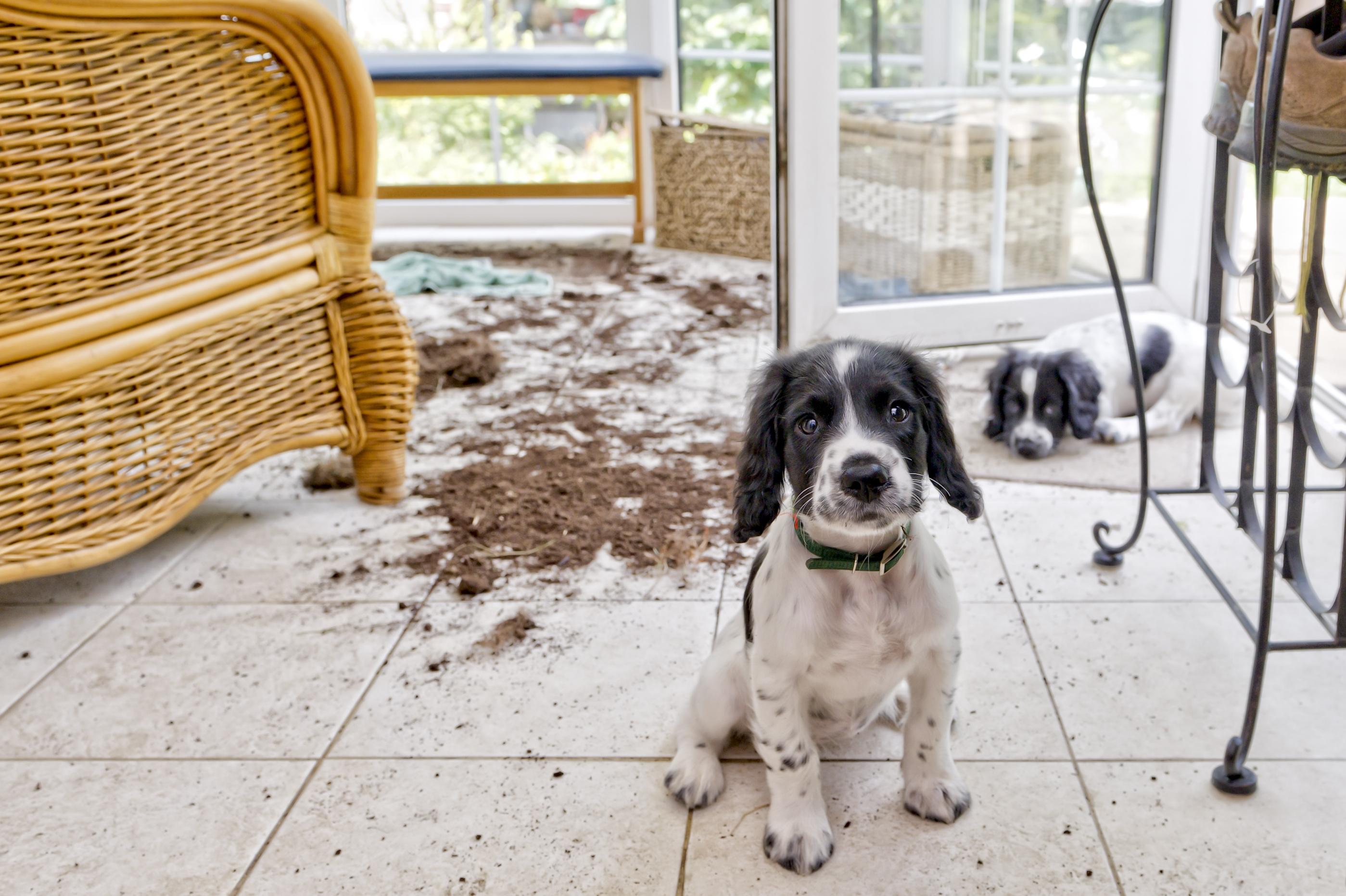 naughty puppies make a mess.
