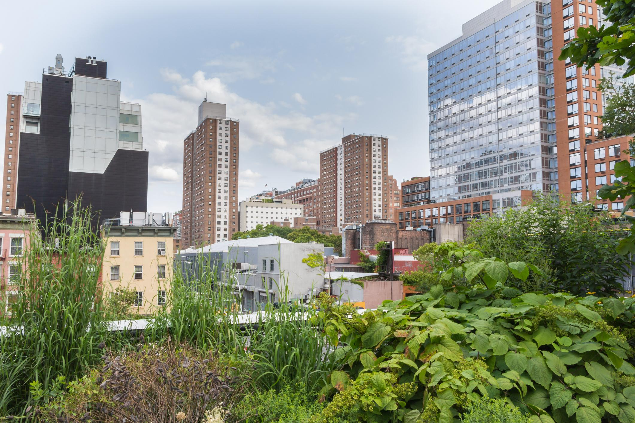 Urban farming shortens the distance from field to fork  Thumbnail