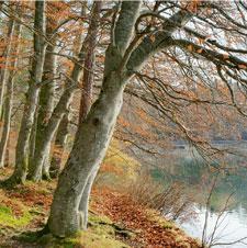Fall Newsletter - 2010 Thumbnail