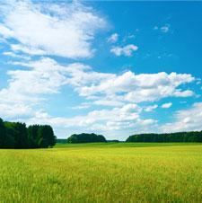 Summer Newsletter - 2011 Thumbnail