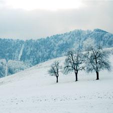 Winter Newsletter - 2010 Thumbnail