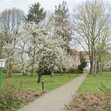 Spring Newsletter - 2011 Thumbnail