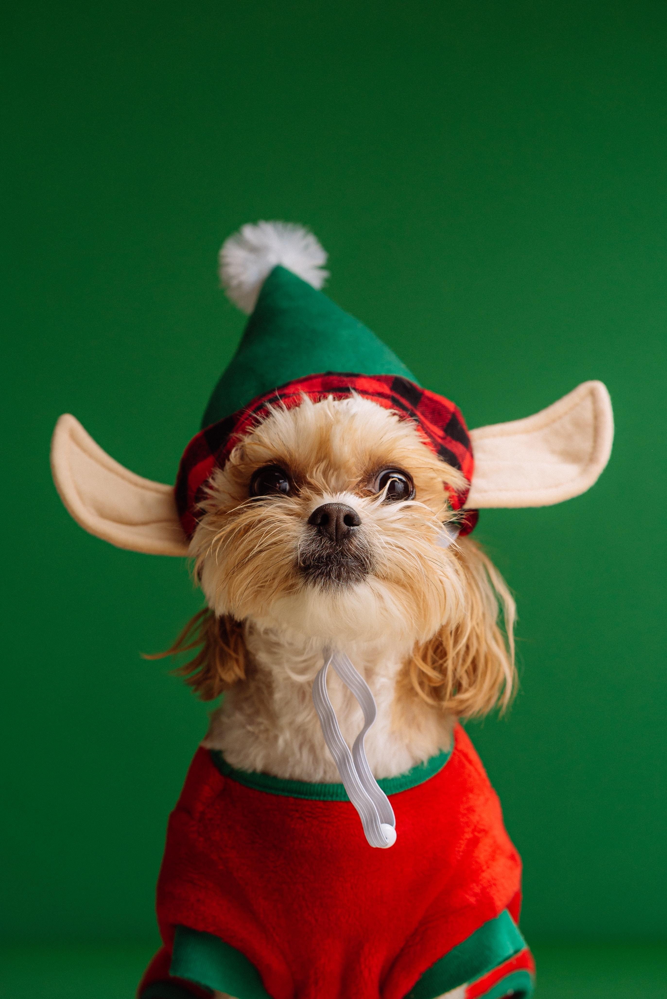 A Silver Lining This Holiday Season? 5 Holiday Expenses You Can Kiss Goodbye Due to COVID-19 Thumbnail