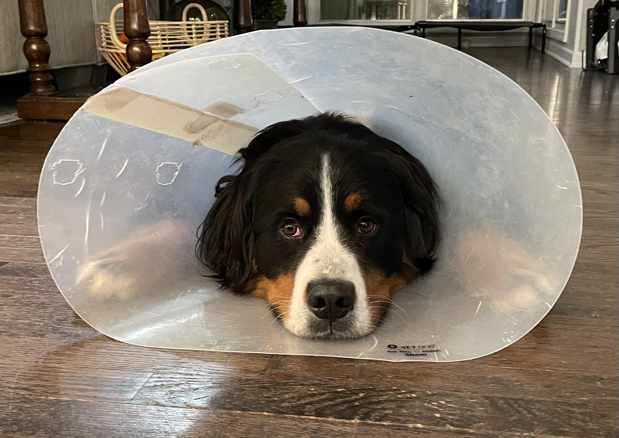 Sometimes We All Need to Wear a Cone Thumbnail