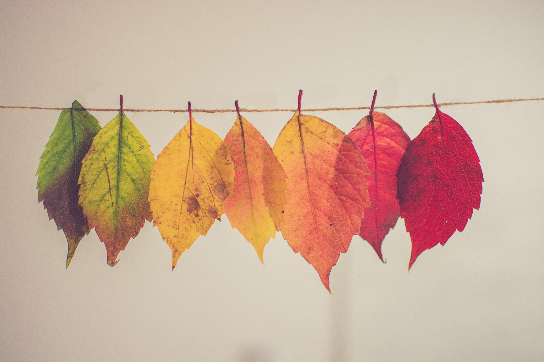 Tips for Fall Saving Thumbnail