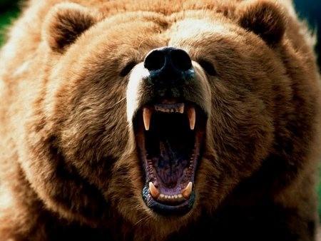 A Bear Encounter in Real Life Thumbnail