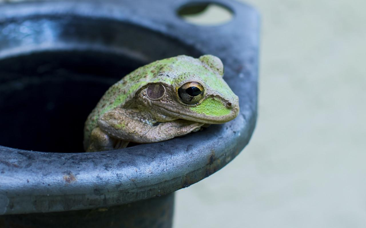 Frog in a pot, or why am I still with a wirehouse? Thumbnail