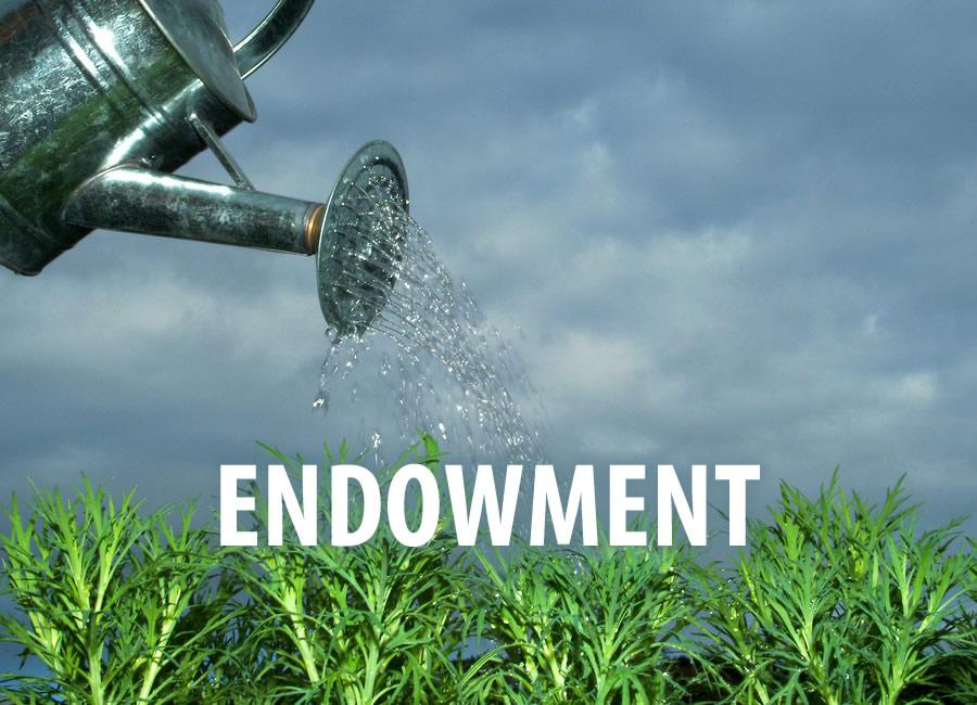 Endowments need to be more fee conscience Thumbnail