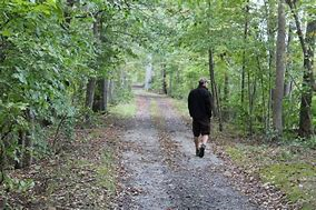 A walk in the woods Thumbnail
