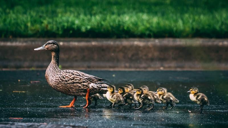 Getting Your Ducks in a Row (An Estate Plan as a Gift) Thumbnail