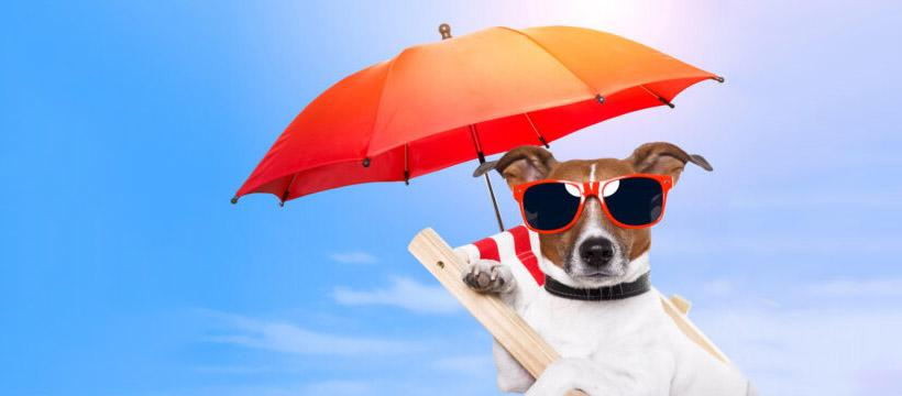 10 Ways the Weather Affects Your Spending Habits Thumbnail