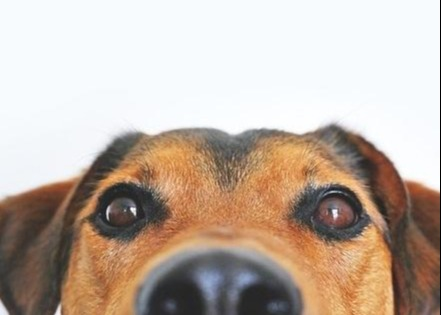 Estate Planning: Don't Forget Your Pet! Thumbnail
