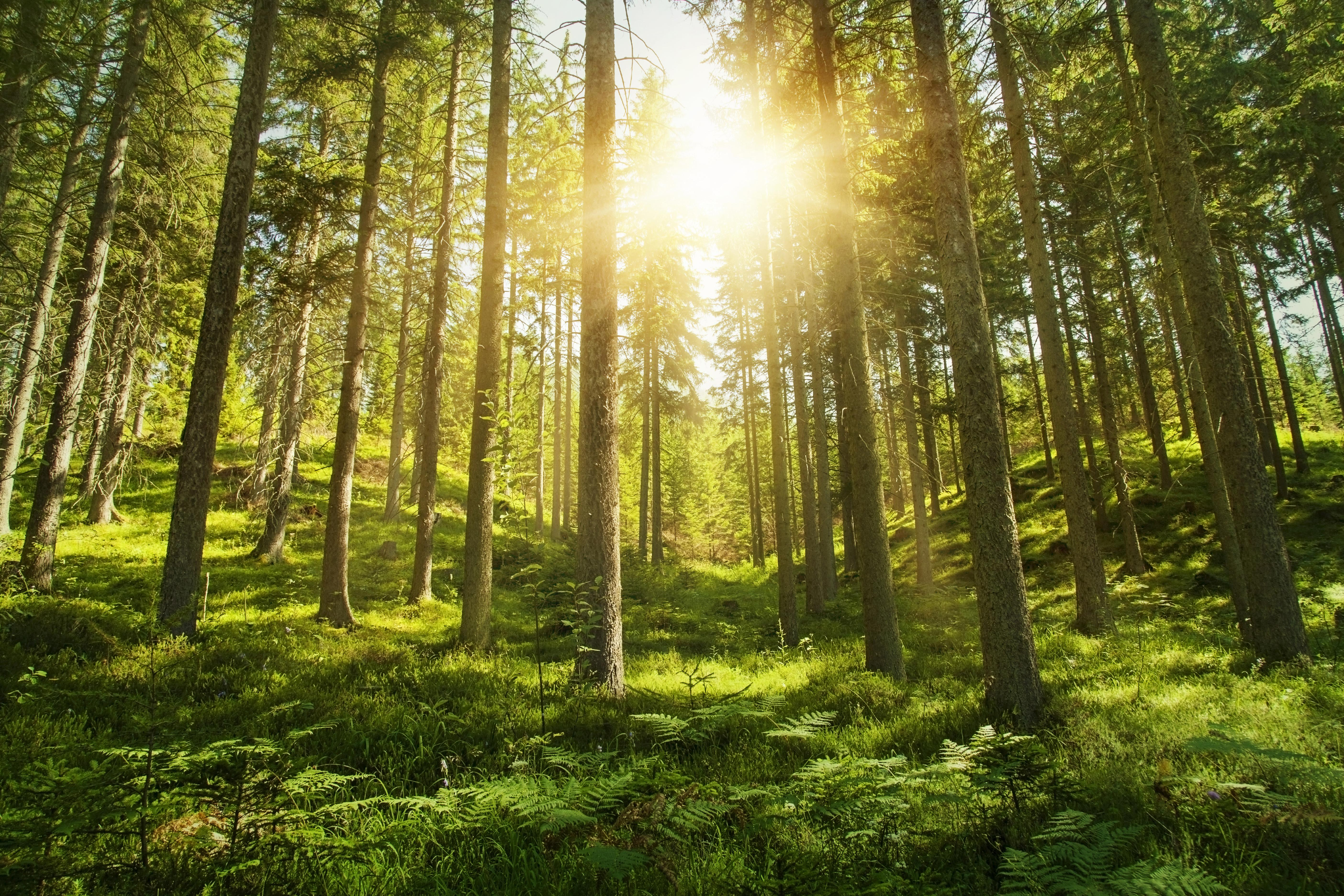 Is Sustainable Investing a Fad?  Thumbnail