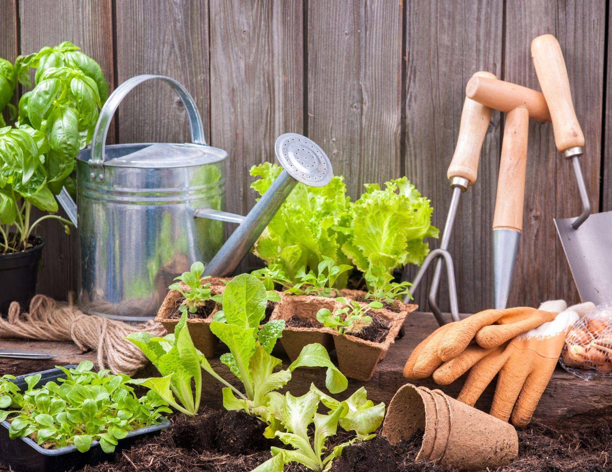 ONLINE:  Gardening with a Master Gardener - March 11th Thumbnail