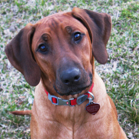 Lexie Ridgeback Photo