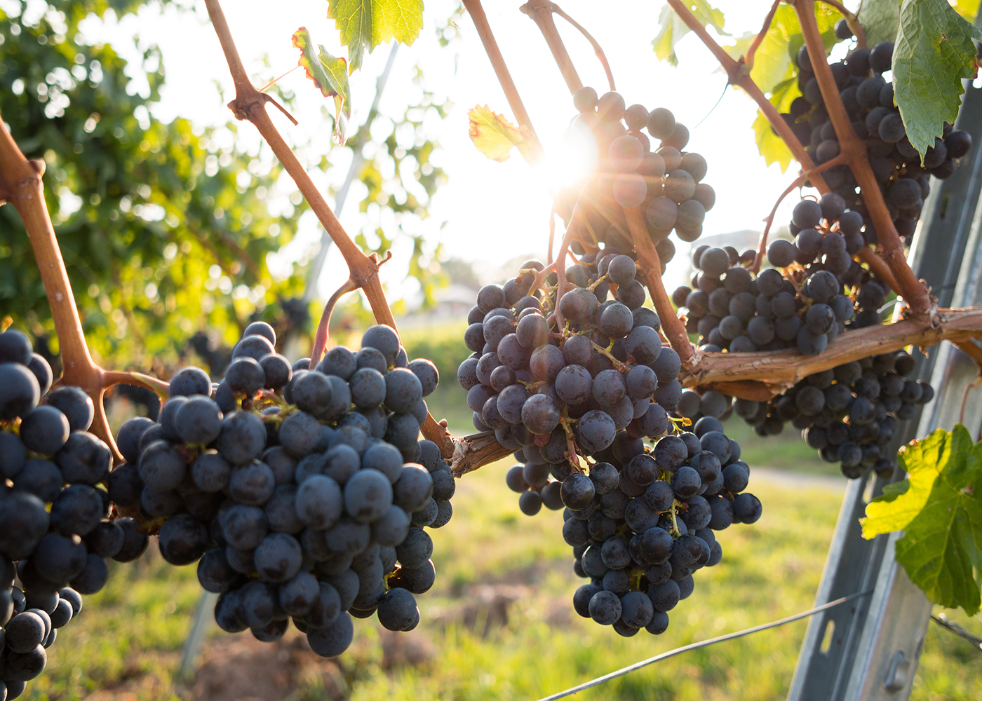 Try One of These Luxury Food & Wine Tours For Your First Post-COVID Getaway Thumbnail