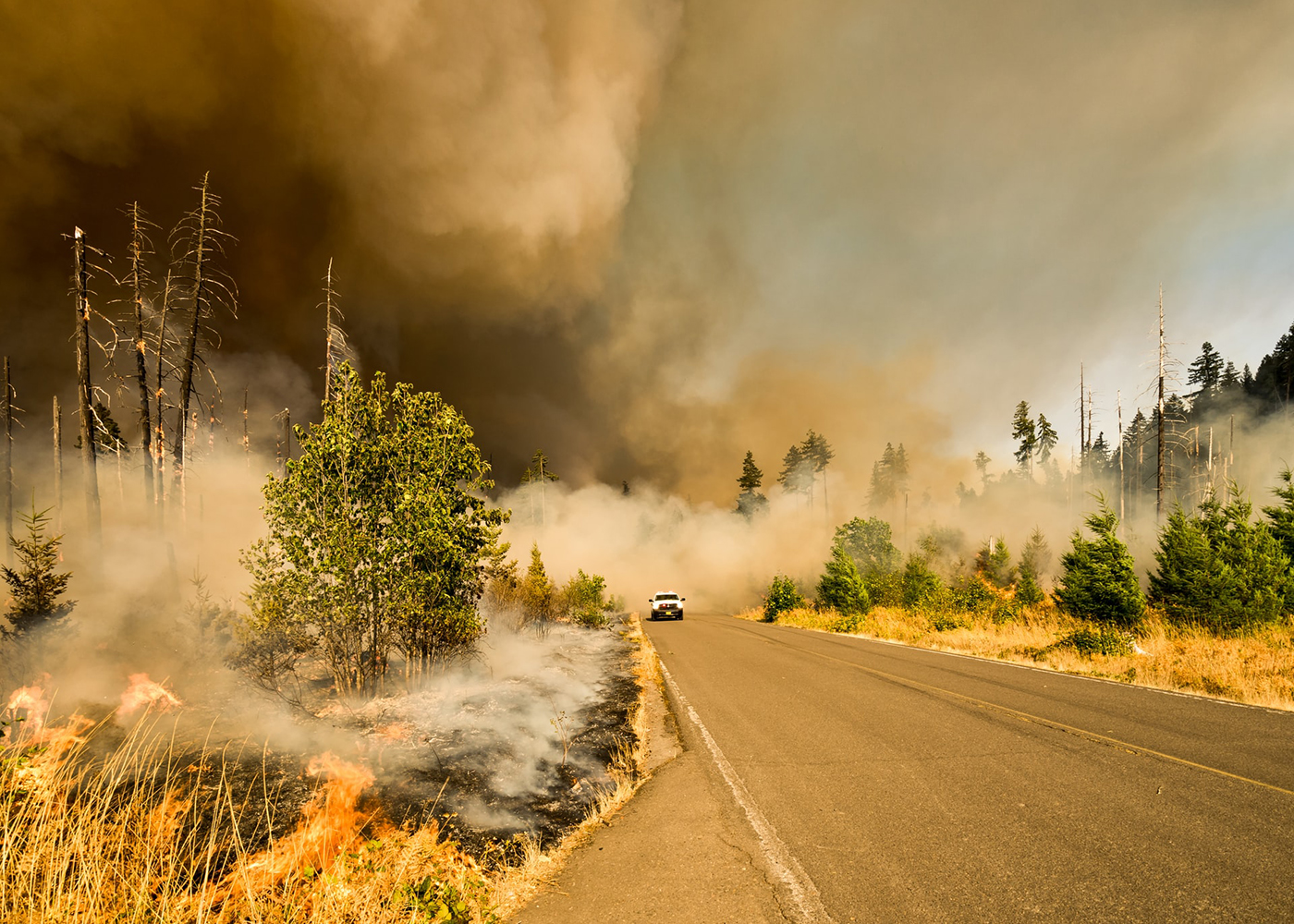 Has Your Property Been Impacted By Wildfires? Take These Next Steps To File a Claim Thumbnail